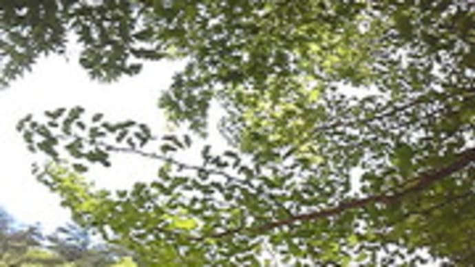 湯船森林公園