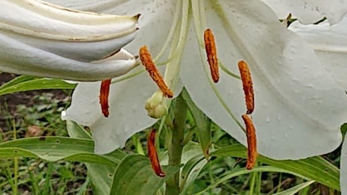 庭の花~と、いつもの☕🍞😃
