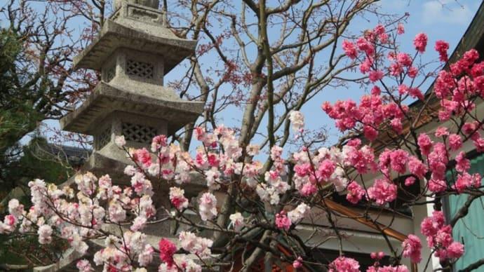 長野県立美術館まで散歩!