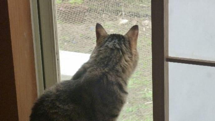 窓辺(最愛のメアリ-がいた)のジュジュです。