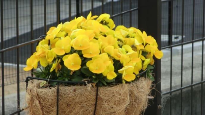 玄関前に咲く花📷街角ぶらり旅