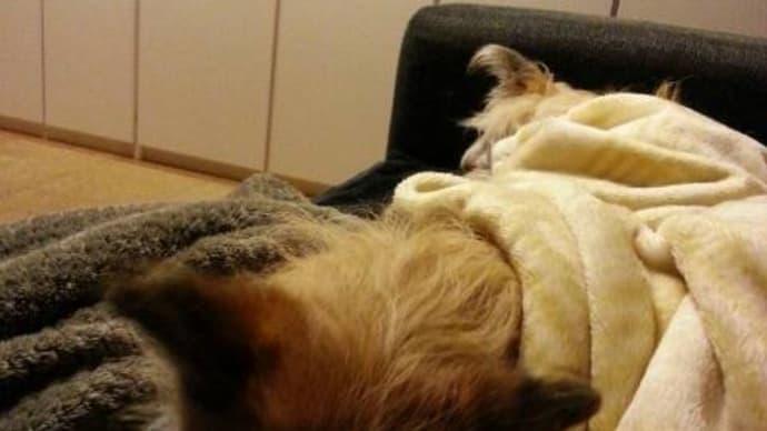 ユノが毛布をカジカジ