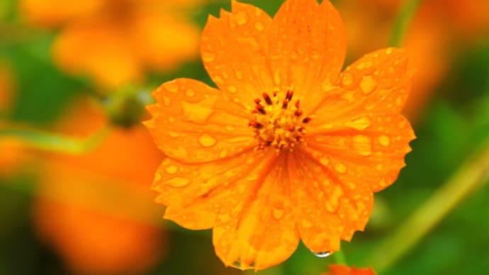 雨に濡れた花々