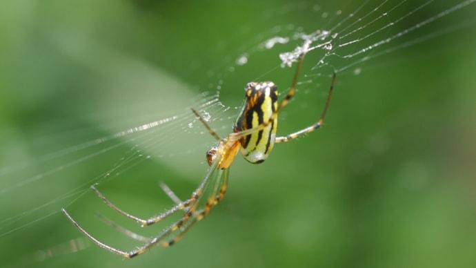 蜘蛛の本を買う女!
