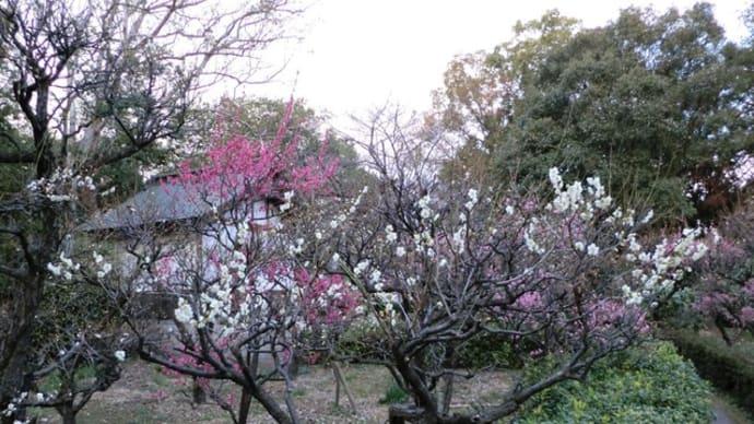 萩原天神境内に咲く梅林📷街角ぶらり旅(10)
