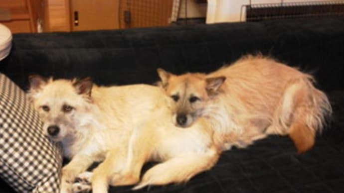 ティアラの枕、ユノの枕