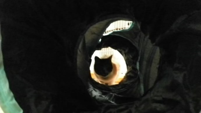 食後のトンネル…。