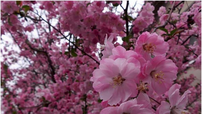 身近な春を楽しむ