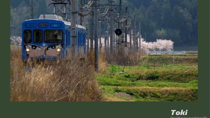 同じく昨年4月の伊賀鉄道 & 桜