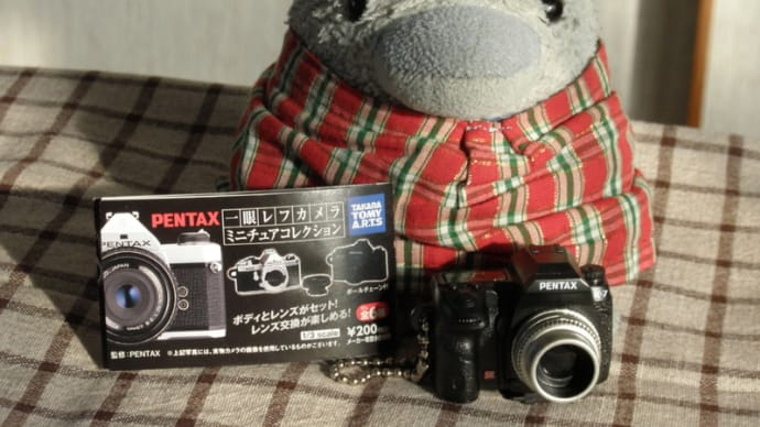 一眼レフカメラ買ってもらいました。