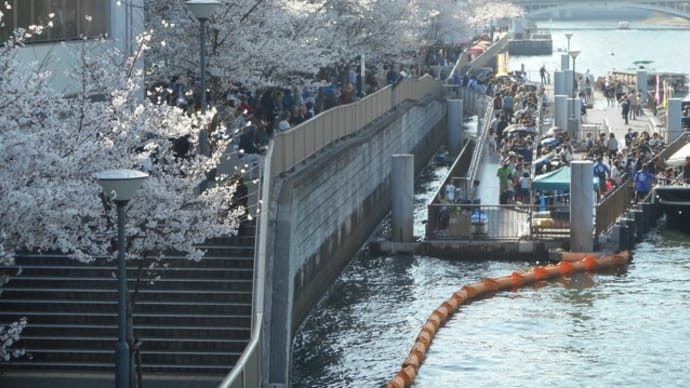 天満橋の桜の風景絶景♪