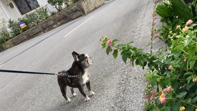 桜咲くお散歩道で