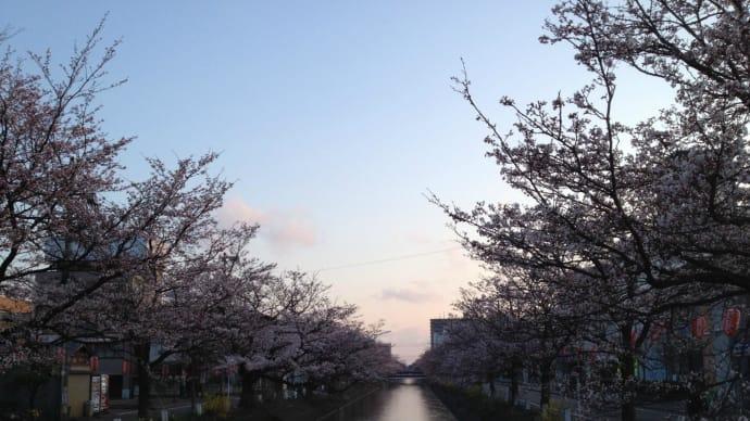 夜明けのウオーク:福島江桜並木
