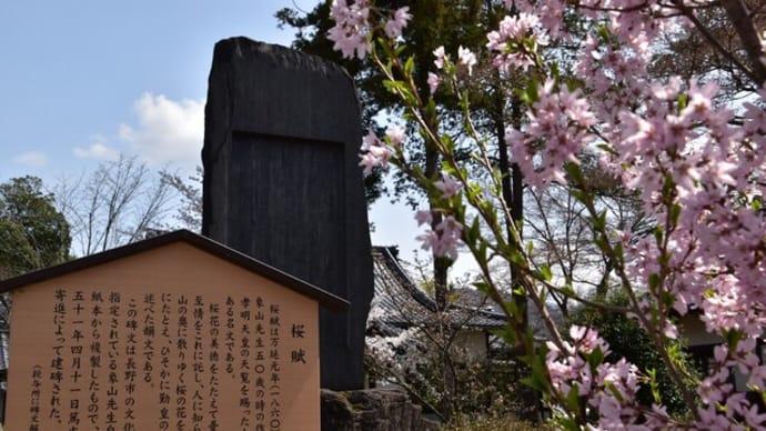 4月2日の桜巡り(No3):松代城下町散策!