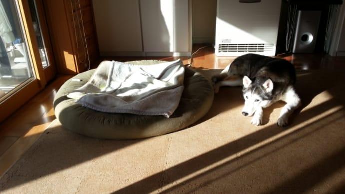 電気毛布より日光