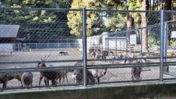 奈良公園のシカは茨城出身?