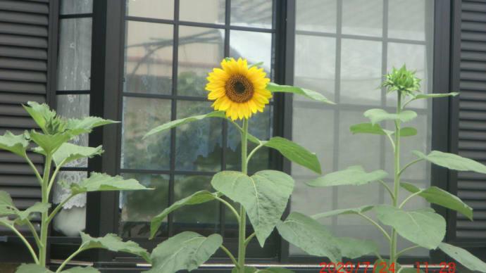 街角に咲く花(豆知識)✿街角ぶらり旅07-31
