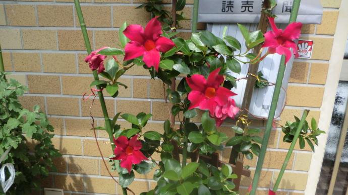 街角に咲く花✿街角ぶらり旅07-28