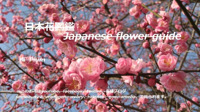 春の先駆け?!A precursor to spring? !!
