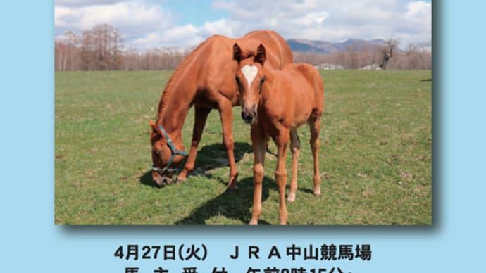 【2021 JRAブリーズアップセール(JRA Breeze Up Sale)】が開催(結果概要)