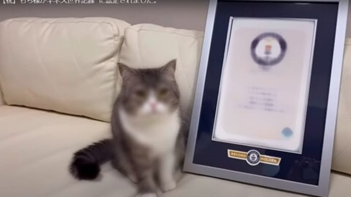 猫「もちまる」がギネス認定