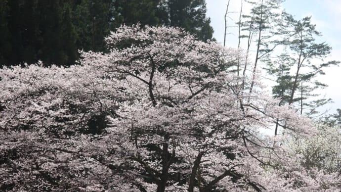 山にも春が