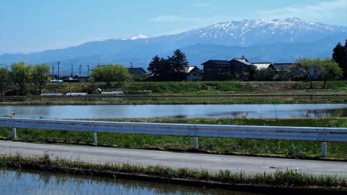 田んぼに水が入り田植えが始まるか、藤の花・ツツジの花