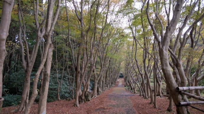 秋の河内藤園へ X100V X-Pro3