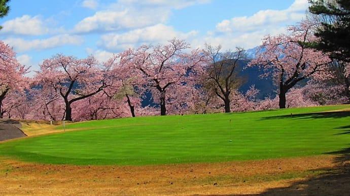 新緑の季節。桜。家で咲くお花。