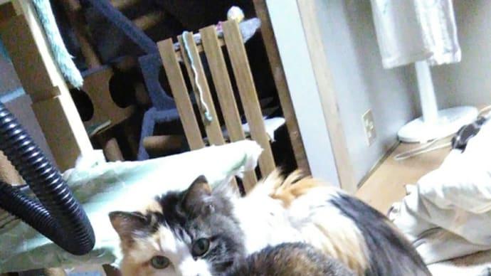 猫の日記念❕我が家の猫たちのご紹介~😅🎵