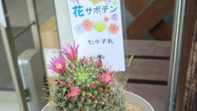 街角に咲く花✿街角ぶらり旅08-08