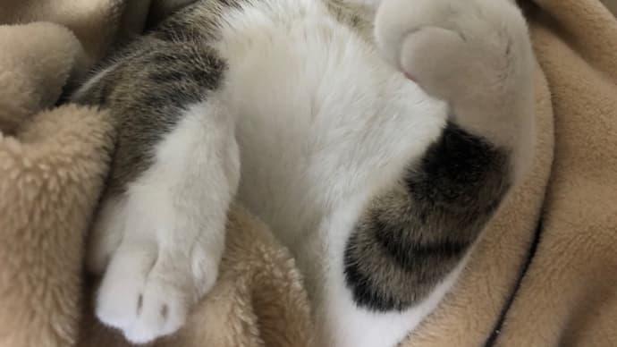今週最後はやっぱり瓦に愛猫みーちゃん☺️