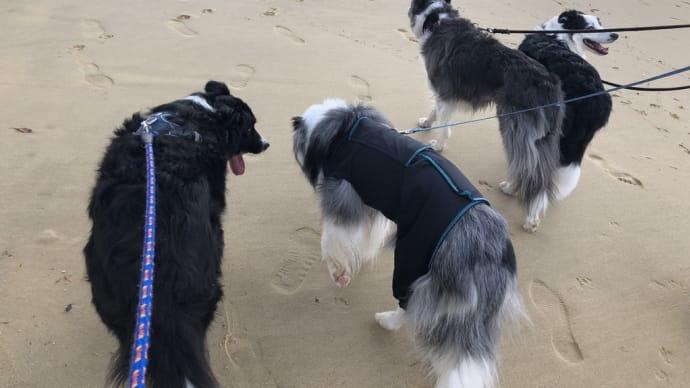 お友達と浜辺を歩く