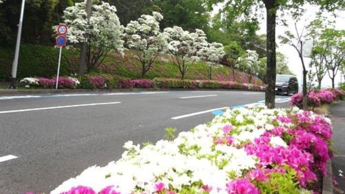 ナンジャモンジの花咲く道