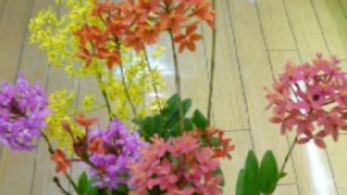 この花はなんていう花?