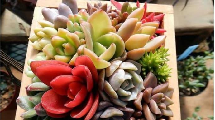 インテリアに最適!愛らしいフォルムの多肉植物を紹介