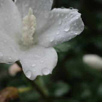 雨の夏休み