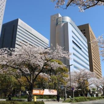 会館前の桜、満開です