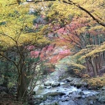 【紅葉】【俳句】【秋】【小林一茶】【松尾芭蕉】