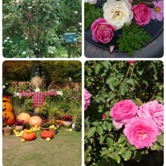 秋のバラ園