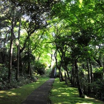 <森林浴 ①>  城山公園
