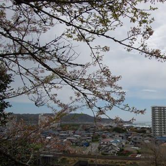 桜の季節が来ました。