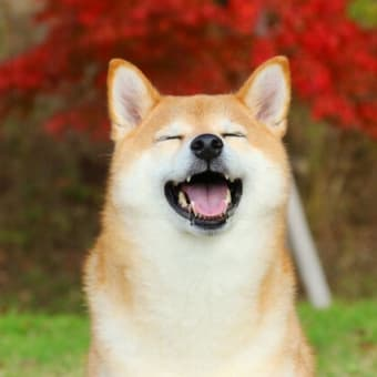 My Adorable Dog(いとおしい犬)