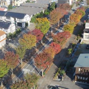 レントン通りの紅葉