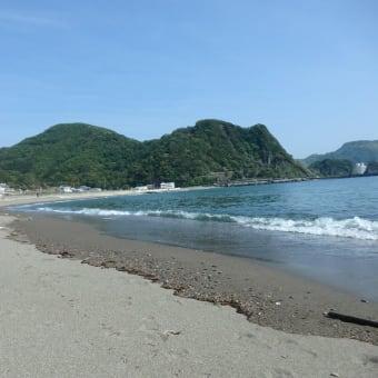 夏みかん(アマナツ)