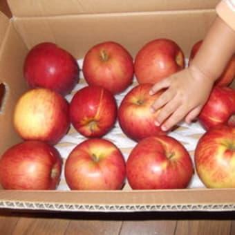 北海道産 わけあり津軽りんご