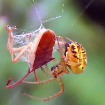小さな虫たちも一生懸命に生きています