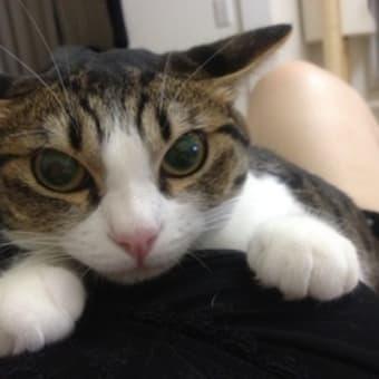現実逃避にネコ