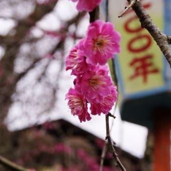 湯田川温泉梅林公園!