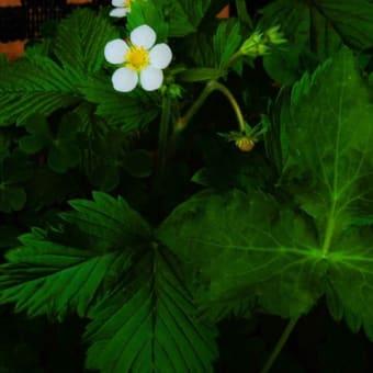 471春に咲いていた写真をみて懐かしいひと時を思い出す時期